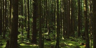 pies Momo w lesie