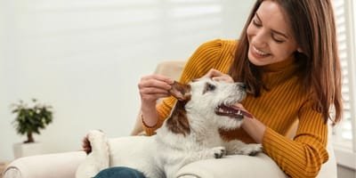 Are you petting your dog correctly?