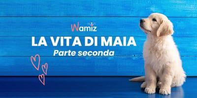 Storie di Cani: La Vita di Maia - Parte II