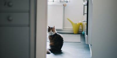 Zamknęła się w łazience i nie wpuściła kota. Jego zemsta to hit internetu! (VIDEO)