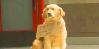Dog sat in front of a shopping center with a sign, people approach and are speechless