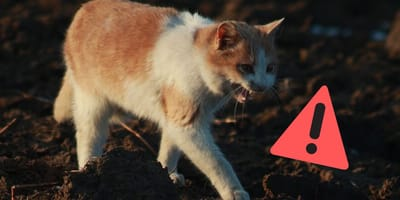 5 Krankheiten, die Katzen auf Menschen übertragen können