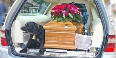 El dueño del perro ha muerto: los dolientes nunca olvidarán el camino al cementerio