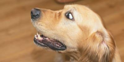 perro asombrado