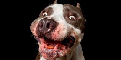 ¿Qué es y cómo detectar la polifagia en perros?