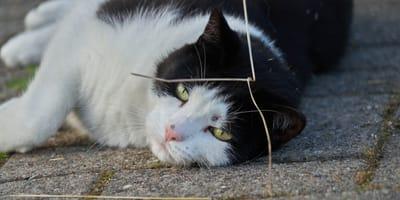 Niet voor de eerste keer: kat doodgeschoten in Moerdijk