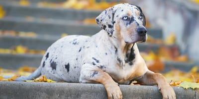 10 najrzadszych ras psów w Polsce
