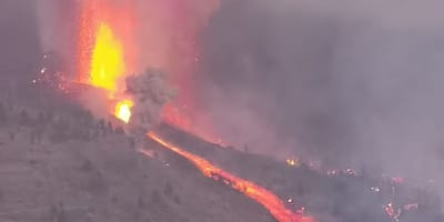 Tragedie op La Palma: honderden dieren tussen leven en dood na vulkaanuitbarsting