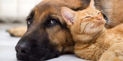 Adottare  un animale da compagnia: qual è il tuo punto di vista?