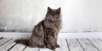 Si può addestrare un gatto come un cane?