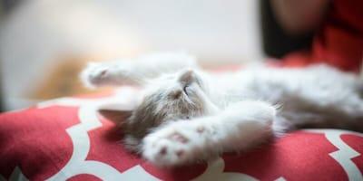 Kittens fall asleep and accidentally create a creepy optical illusion