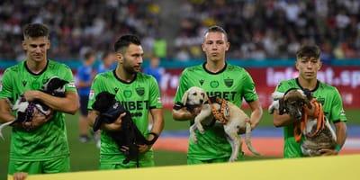 Genialer Plan: Fußballer laufen mit Hunden aufs Feld