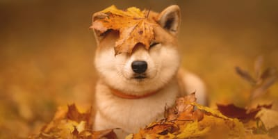 Come proteggere cani e gatti dai parassiti d'autunno?