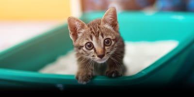 Biegunka u małego kota – co może oznaczać?