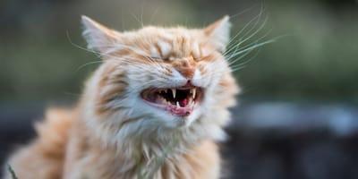 Risate assicurate con queste 10 foto di gatti divertenti!