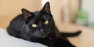 Begründung macht fassungslos: Schwarzes Kätzchen im Tierheim Köln abgegeben