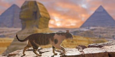 Il video del gatto egiziano sta spopolando su Tiktok