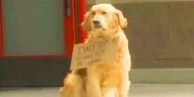 Perro delante de un centro comercial con un cartel, se acercan y ¡no dan crédito a lo que ven!