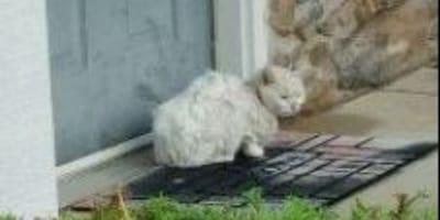Salvano una gattina abbandonata e scoprono che ha subito una barbarie