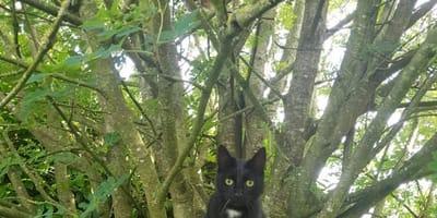 2 Katzen verstecken sich im Baum: Nur die Schlausten können beide sehen!