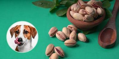 Posso dare i pistacchi al cane? Fido e la frutta a guscio