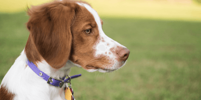 Does your dog wear the right collar? If not, you could face a £5,000 fine