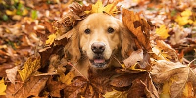 8 ways to take care of your dog this fall