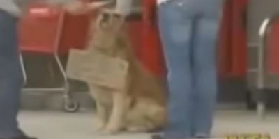 Cane in strada con un cartello al collo lascia tutti di stucco (Video)