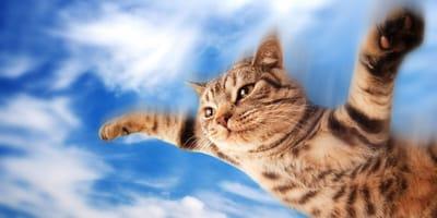 ¿Qué es el ''síndrome del gato volador'' y qué peligros presenta?