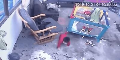 Katze sieht Baby und verhindert schlimmes Unheil! (Video)
