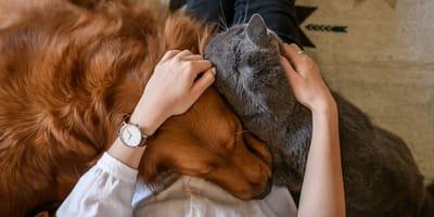 Una persona abrazando a sus mascotas