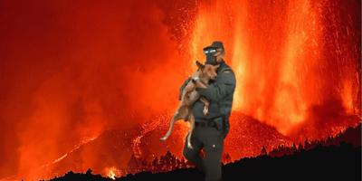Spectaculaire beelden van dierenreddingsactie na vulkaanuitbarsting op La Palma