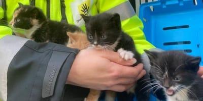 """Dierenambulance Brabant haalt geen katten meer op: """"Het dierenopvangcentrum stroomt momenteel over"""""""