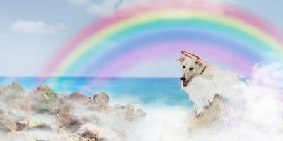 Nowe prawo ma chronić opiekunów po śmierci psa lub kota