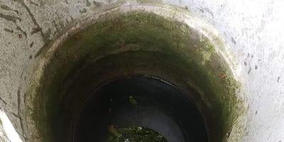 Grzybiarz słyszy odgłosy dobiegające z pobliskiej studni: w środku o życie walczy szczeniaczek!