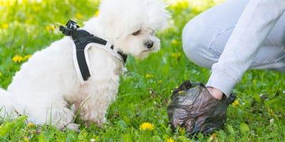 Monto de la multa por no recoger las heces de tu mascota en Colombia