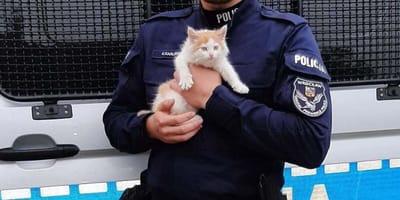 Policjant ratuje maleńkiego kota przed lisami. A potem robi coś, co zaskakuje wszystkich