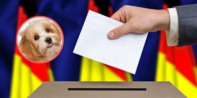 Bundestagswahl 2021: Dürfen Hunde mit ins Wahlbüro?