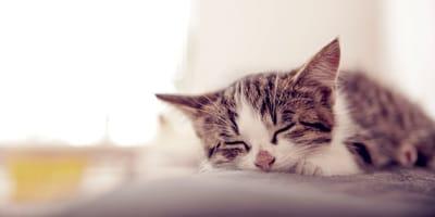 Cosa significa sognare gatti?