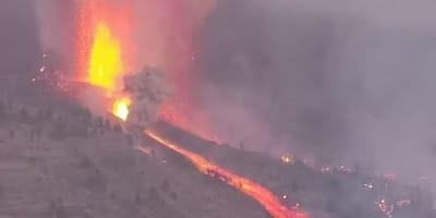 Tragedia na wyspie La Palma. Setki zwierząt cierpią z powodu wybuchu wulkanu
