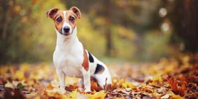 Voorkomen beter dan genezen: groene eikels giftig voor honden