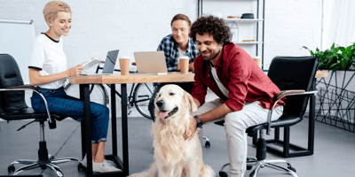 Dog friendly offices and bringing your dog to work in the UK