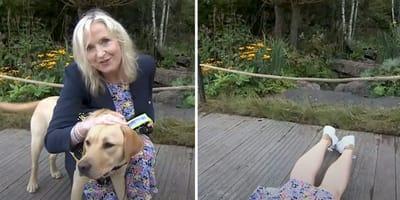 Labrador heeft er geen zin meer in en sleurt weervrouw mee op live-tv (video)