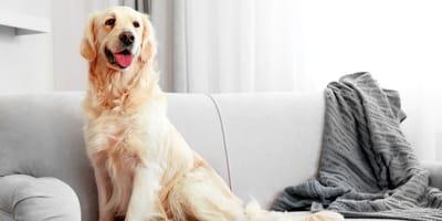 Come scegliere bene i cani da appartamento?