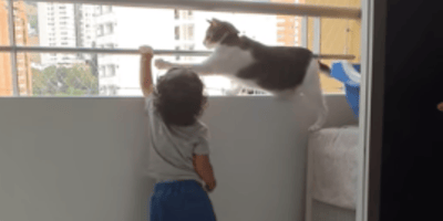Bebé se acerca al balcón: la reacción del gato deja a su padre con la boca abierta (Vídeo)