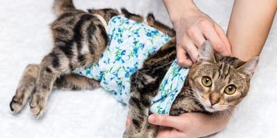Kastracja kota – możliwe powikłania