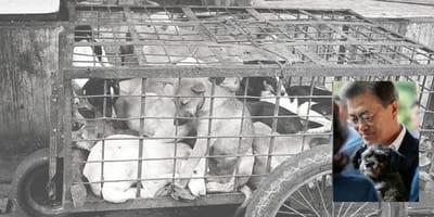 President Moon Jae-in wil hondenvlees verbieden