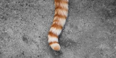 Deutscher Tierarzt sieht Katze: Er traut seinen Augen und Ohren nicht!