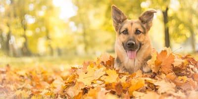 Wichtige Checkliste für alle Hundehalter im Oktober