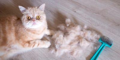 Najskuteczniejsze sposoby na odkłaczanie kota
